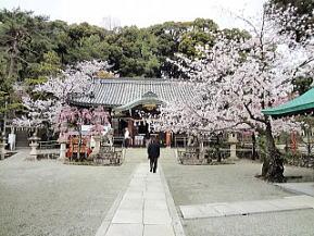 桜のころの境内
