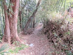 ホタル繁殖地に通じる道
