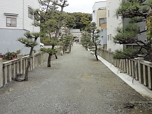 参道の松並木