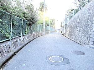 つつじ園に通じる道