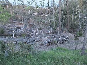 つつじ園の裏山の倒木処理